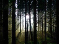 'Lichtstimmung im Wald' von brava64 bei artflakes.com als Poster oder Kunstdruck $18.03