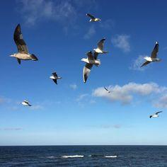 Apropos Möwe möwie noch eenen? Der Klassiker an der Ostsee.  #rsweekender15 #nachklapp