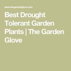 Best Drought Tolerant Garden Plants   The Garden Glove