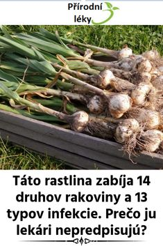 Táto rastlina zabíja 14 druhov rakoviny a 13 typov infekcie. Prečo ju lekári nepredpisujú? Green Beans, Ale, Vegetables, Syrup, Food, Vegetable Recipes, Eten, Ales, Veggie Food
