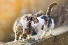 Why Do Cats Rub Against You? A Weird Cat Behavior Explained