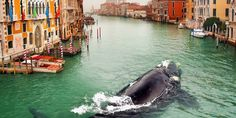 What the hell is a whale doing swimming in the Venice canal? #travel #roadtrips #roadtrippers
