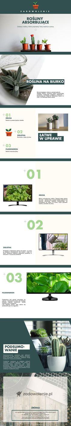 Znajdż roślinę na Twoje biurko najbardziej absorbującą.