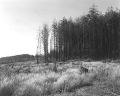 Robert Adams: Turning Back - Coos County, Oregon, 1999-2003, gelatin-silver print
