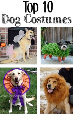 Top 10 Dog Costumes!