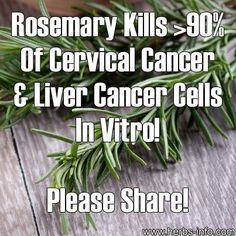 The good news for Rosemary as a wonderful medicinal herb just keeps on coming! It was only a few weeks ago that we reported that Rosemary had been found to have a remarkable positive effect on memory. Now we have discovered that scientists have found further evidence of Rosemary's potential as an anti-cancer agent.
