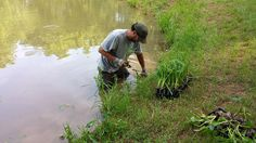 Establishing a shoreline vegetative buffer is an excellent natural way to promote and maintain good water quality in your pond or lake. Landscape Engineer, Pond Maintenance, Farm Pond, Ponds Backyard, Water Quality, Northern Virginia, Old Farm, Outdoor Camping, The Neighbourhood