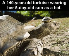 140-year-old tortoise.