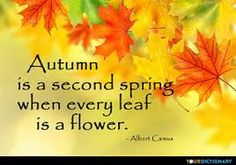 Autumn is a second Spring when every leaf is a flower. - quote by Albert Camus on YourDictionary. Spring Quotes, Fall Quotes, Season Quotes, Rainbow Rowell, Anne Of Green, Albert Camus, Forest School, Flower Quotes, Word Of The Day