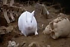 Beware the Bunny -- The Easter Special Animal Video of the Day!!!  ... see more at PetsLady.com ... The FUN site for Animal Lovers