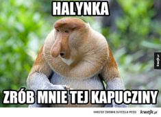 Typowy Janusz Very Funny Memes, Wtf Funny, Memes Humor, Animals And Pets, Funny Animals, Polish Memes, Grumpy Cat, Reaction Pictures, Best Memes