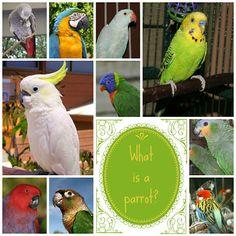 What Makes a Parrot a Parrot?