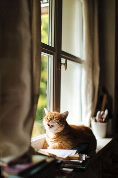 Cat Yawning, Like A Cat, Ginger Cats, Window Sill, Get Outside, Hilarious, Stock Photos, Portrait, Face