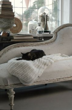 lucky cat on a beautiful chaise