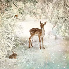 Winter Glade - christmas card by Bug Art Christmas Scenes, Christmas Pictures, Christmas Art, Winter Christmas, Holiday Pics, Christmas Decorations, Winter Images, Winter Pictures, Animal Original