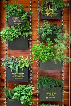 How To Urban Garden These 'Vertical Balcony Garden Ideas' will inspire you to generate space and how to make balcony vertical garden. - These 'Vertical Balcony Garden Ideas' will inspire you to generate space and how to make balcony vertical garden. Vertical Herb Gardens, Vertical Garden Diy, Vertical Planter, Herb Planters, Small Gardens, Planter Ideas, Vertical Garden Vegetables, Fence Hanging Planters, Vertical Garden Systems