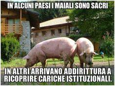 La vita dei maiali nel mondo.