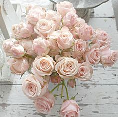 Palest pink roses