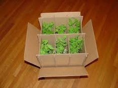 Image result for plant packing boxes