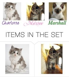 """""""Charlotte,Maxine and Marshall (Pet cats)"""" by maxinehearts ❤ liked on Polyvore featuring art"""