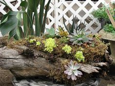 Mossy natural log