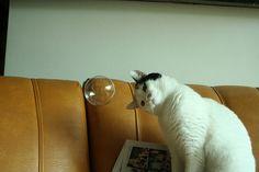 Speak to me magic bubble! #funny #cat