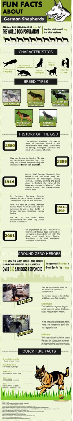 Fun facts about German Shepherds you probably don't know. From the 1800's and herding to WWI, the Red Cross & seeing-eye dogs - this breed has done it all!