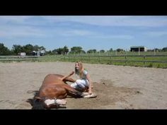 How To Teach Your Horse To Lay Down - YouTube