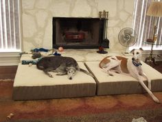 The best kinds of beds for greyhounds: older greys may appreciate raised orthopedic beds, as they may have more trouble laying down or getting up.