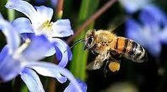 Manuka Honig,Bienenkosmetik,Spanische Hochlandblütenpollen