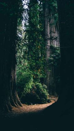 Download iPhone Xs, iPhone Xs Max, iPhone XR HD wallpapers  forest, trees, shadows, passage, dark - Free Wallpaper | Download Free Wallpapers