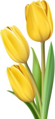 Tulip 16 [преобразованный].png