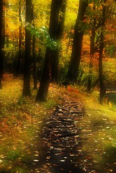 Hidden Forest - Autumn colors in New England