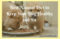 Dog Training Chewing Best Natural Food to Keep Your Dog Healthy and Fit.Dog Training Chewing Best Natural Food to Keep Your Dog Healthy and Fit Dog Training Techniques, Dog Training Tips, Pet Care Tips, Dog Care, Small Puppies, Dogs And Puppies, Dog House With Ac, Dog Grooming Shop, Free Dog Food