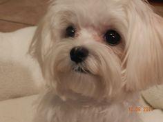 Sweet looking doggy, sweet looking pin, sweet looking Rice Krispy Treat! THERES TO MANY SWEET STUFF!!!