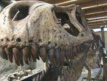 Miljoenen jaren geleden leefde er dinosaurussen op deze wereld. Het enige dat van deze dieren nog over is gebleven, zijn botten.