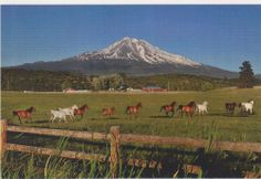 Alpine ranch horses near Mt. Shasta, Siskiyou County, California unused postcard
