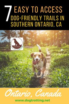 7 Easy-to-find Dog-friendly Trails in Southern, Ontario