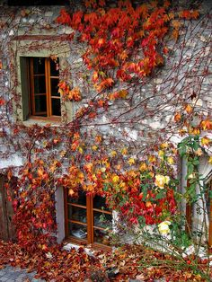 Autumn Ivy, Savoie, France photo via residual
