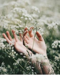 Hands in white flowers,