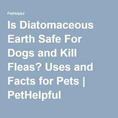 1000 Ideas About Killing Fleas On Pinterest Fleas Flea