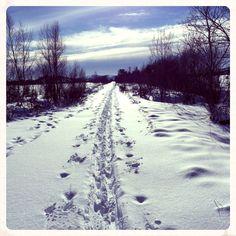 Vinter 2014