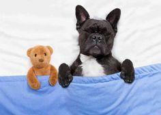 Спокойной ночи, дорогие мои!   #АлександрЖданович #Криминальныйинфобиз #позитивныекартинки #позитив #спокойнойночи
