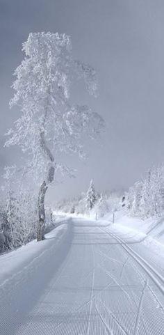 Beautiful Winter and Snow Landscape Pictures – Nuran Türközü Winter Szenen, Winter Love, Winter Magic, Winter White, Snow White, Winter Season, Winter Fairy, Ski Season, Winter Walk