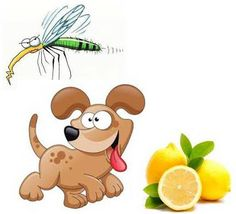 HUGE LIST...DIY Natural, Herbal, Homeopathic Flea, Tick, Mosquito Repellent Sprays, Rubs, Dips, Rinse for Dogs and Cats