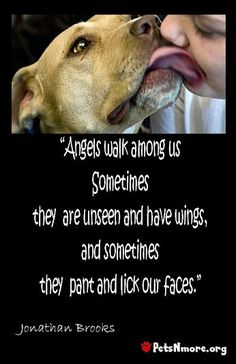 angels walk among us who have wings but sometimes they are dogs,petsnmore.org
