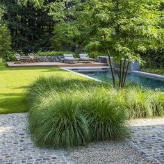Laurijssens Architects Architectuur I Woning I Hasselt Outdoor Pool, Outdoor Gardens, Outdoor Decor, Natural Garden, Ornamental Grasses, Pool Houses, Water Garden, Backyard Landscaping, Garden Inspiration