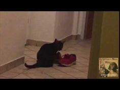 Egyptian Mau-black smoke-beautiful cats-Katzenblog Egyptian Mau, Black Smoke, Beautiful Cats, Animals, Pretty Cats, Animales, Animaux, Animal, Animais