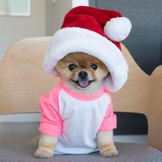 Image may contain: one or more people, dog, hat and indoor Super Cute Animals, Cute Little Animals, Cute Funny Animals, Cute Cats, Cute Baby Dogs, Cute Little Puppies, Cute Puppies, Jiff Pom, Merry Christmas Dog