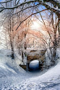Morning sun glowing above small bridge in a snowy forest